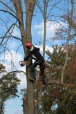 alans-tree-service-indianapolis